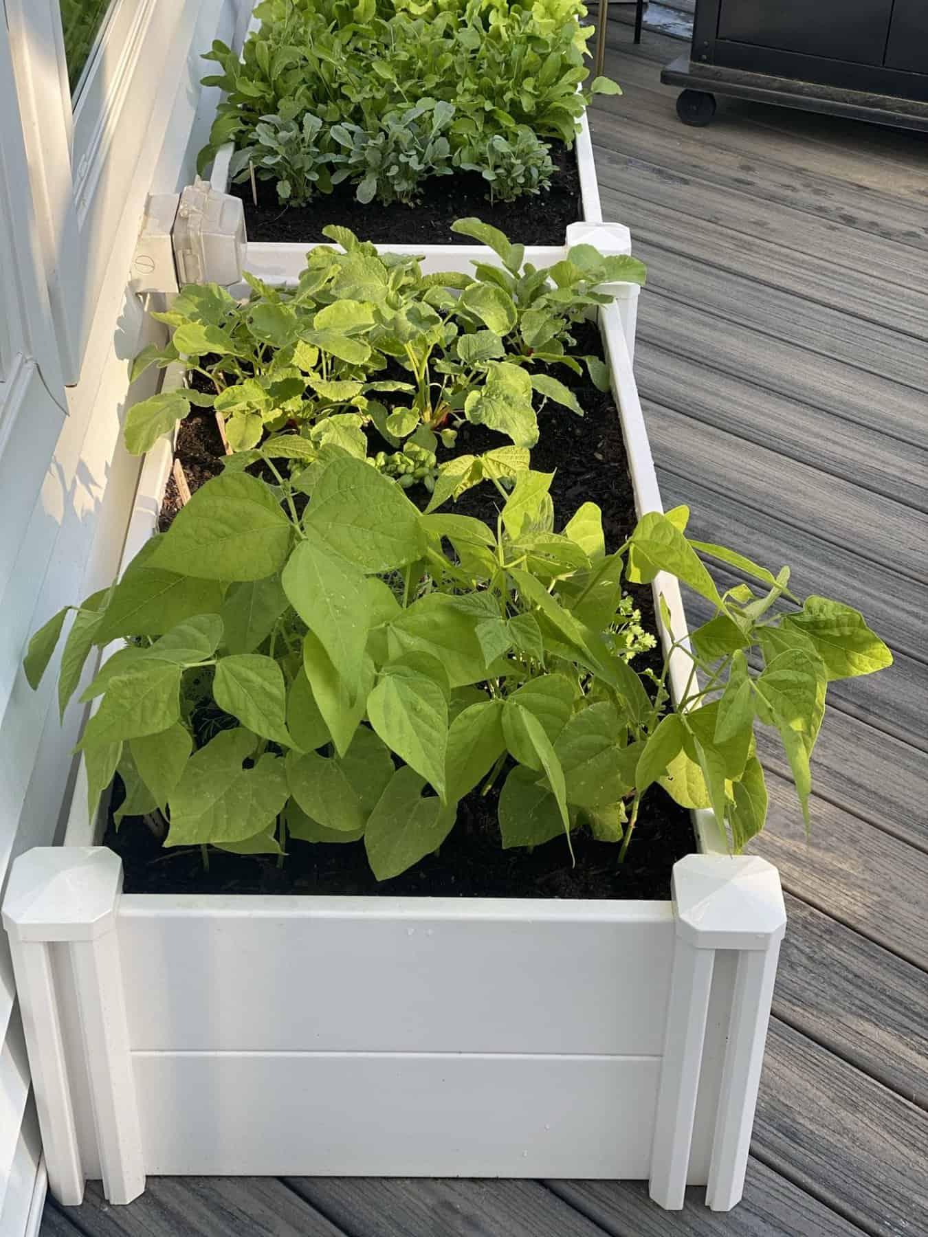 Beginner Gardening Advice