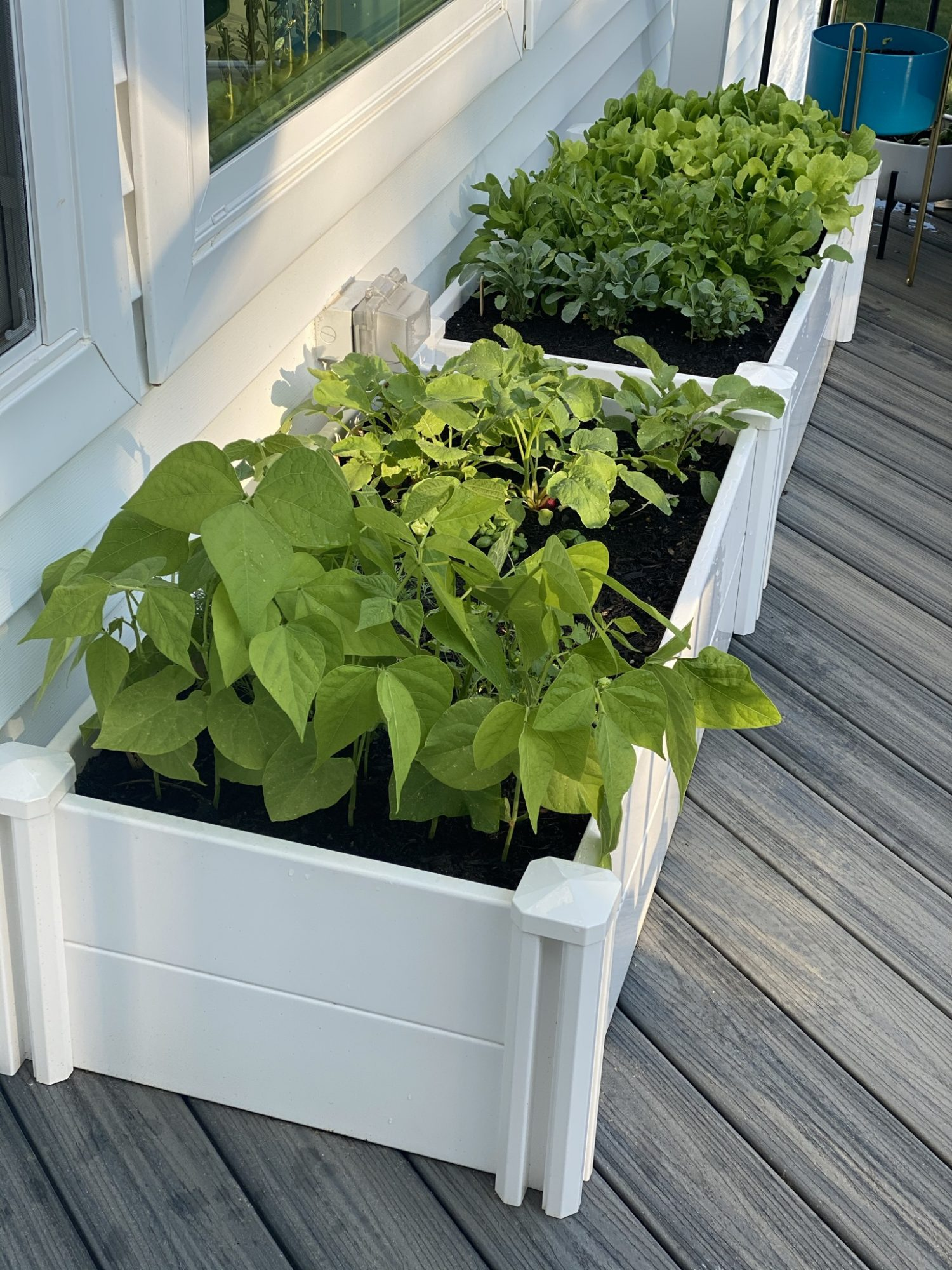Beginners Guide to Home Gardening
