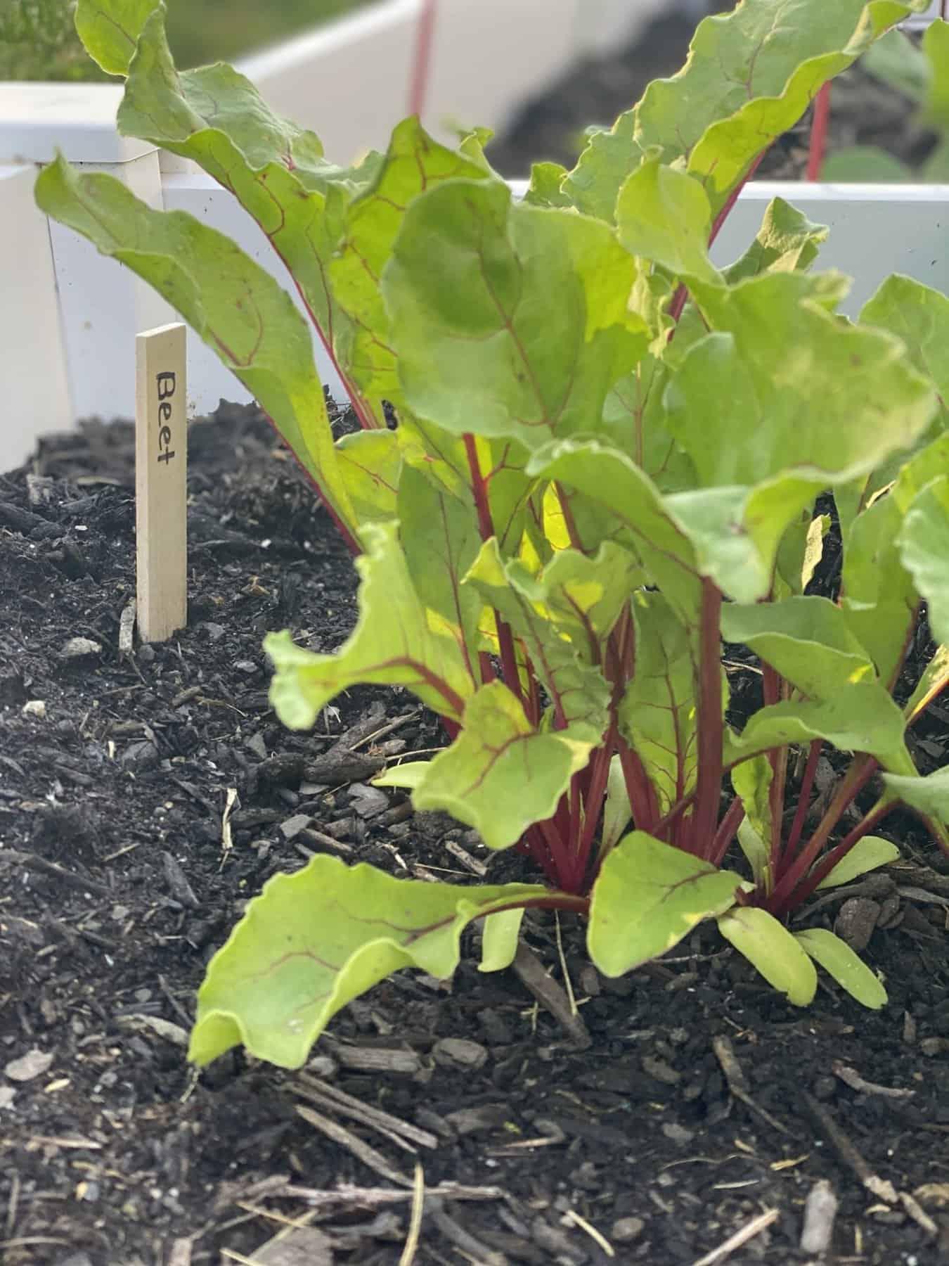 Home Garden for Beginners